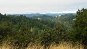 Nordliga Kalifornien redwoodträd Arkivfoton