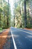 Nordliga Kalifornien redwoodträd Forest Road Arkivfoto