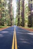 Nordliga Kalifornien redwoodträd Forest Road Arkivfoton