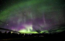 Nordliga lampor över Island Royaltyfri Foto