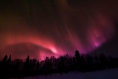Nordliga ljus över Lapland Royaltyfri Fotografi