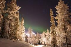 Nordliga ljus ovanför den vita skogen Arkivfoton