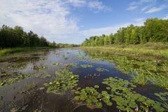 Nordliga våtmarker Royaltyfria Bilder