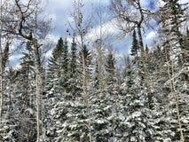 Nordliga Wisconsin i vinter royaltyfri fotografi