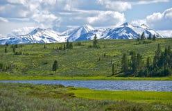 Nordliga Yellowstone Arkivbild