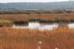 Nordligt landskap för höst Fotografering för Bildbyråer