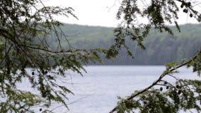 Nordligt sjölandskap stock video
