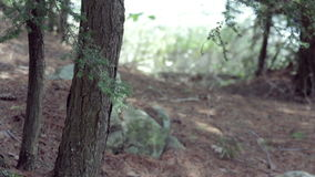 Nordligt skoglandskap lager videofilmer