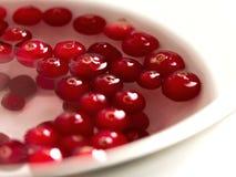 Nordligt träskbär för tranbär Röd, mogen saftig frukt royaltyfri bild