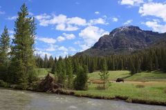 Nordosteingangs-Straße Yellowstone Stockfoto
