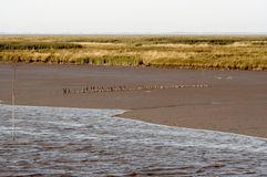 Nordseeküste Stockfotografie