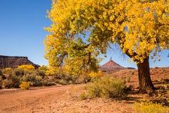 Nordsixshooter-Spitze durch Blätter der goldenen Pappel Lizenzfreie Stockbilder