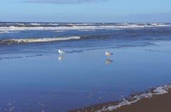 Nordsjönkust royaltyfri foto