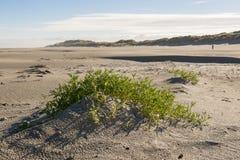Nordsjönstrand av ön Terschelling i Nederländerna Royaltyfri Fotografi