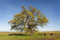 Nordtafelberg-ökologische Reserve, Oroville, Kalifornien stockbild