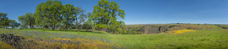 Nordtafelberg-ökologische Reserve, Oroville, Kalifornien lizenzfreie stockbilder