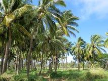 Nordufer des Oahu-Palmebauernhofes Stockfotografie