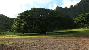 Norduferoahu-Gebirgslinie und grüner Baum und Feld lizenzfreies stockfoto