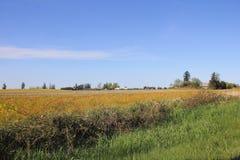 Nordvästlig jordbruksmark i Washington State Arkivbild