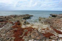Nordvästliga turker & Caicos för punktnaturreserv Arkivfoto