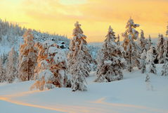 Norefjell, Noruega Imagens de Stock