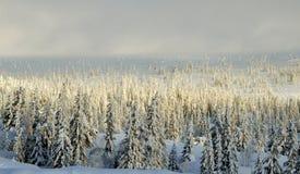 Norefjell, Noruega Imagenes de archivo