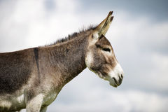 Norfolk Broads, Donkey profile view Stock Images