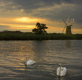 Norfolk Broads - United Kingdom. Mute Swans (Cygnus olor) on the River Ant at sunset on the Norfolk Broads in the United Kingdom Royalty Free Stock Image