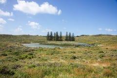 Norfolk Pines and Lake Royalty Free Stock Image