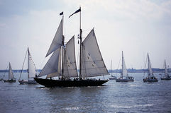 Norfolk Tall Ship Royalty Free Stock Image