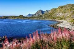 Norge Lofoten fjord, berglandskap arkivbild