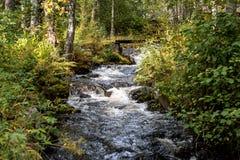 Norge nästan Oslo, liten flod i skogen royaltyfri bild