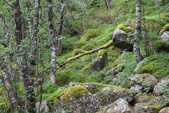 Norge natur Arkivfoton