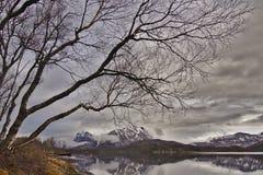 Norge natur Royaltyfri Foto