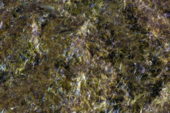 Nori background Royalty Free Stock Photos