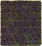 Nori dried sheet Stock Images