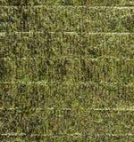 Nori edible seaweed sheet Stock Images