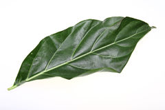 Nori Leaf Stock Images