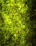 Nori seaweed Royalty Free Stock Image