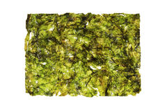 Nori seaweed sheet Stock Photography