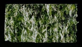 Nori sheet seaweed dried seaweed background texture image. Stock Image