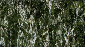 Nori sheet seaweed dried seaweed background texture image. Stock Images