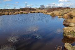 Norland Moor. Small pond on Norland Moor Stock Images