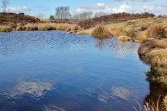 Norland Moor. Small pond on Norland Moor Royalty Free Stock Photo