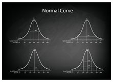 Normal Distribution Diagram on Green Chalkboard Background. Business and Marketing Concepts, Illustration Set of 4 Gaussian Bell Curve or Normal Distribution Royalty Free Stock Photography