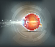 Normal eye. Sight abstract background vector illustration
