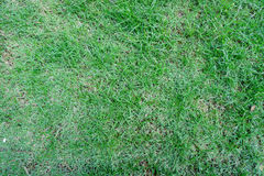 Normal grass on the playing field Royalty Free Stock Images