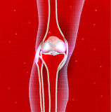 Normal knee joint abstract red background Royalty Free Stock Photos