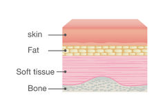 Normal Skin Anatomy of Human. Ideal for medical Illustration and science Stock Photo