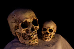 Normal and small size of human skull on dark Royalty Free Stock Photography